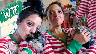 A DeMartino Christmas! Vlogmas Day 24! Niki DeMar