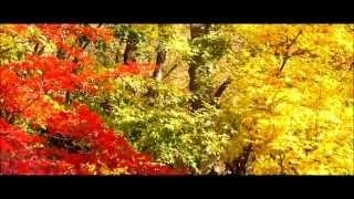 Oyurai, Herbstblätter, Music-Video, 2013