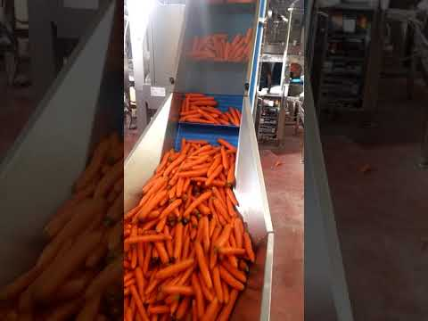 Confezionamento automatico carote in vaschetta / Automatic carrot packaging in trays
