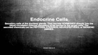 Medical vocabulary: What does Endocrine Cells mean