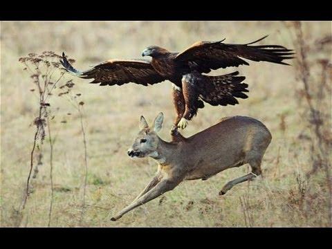 Tri napada orlova