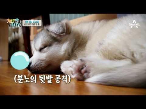 [선공개] 늑대가 되고싶은 아기 허스키 '뚜이'_웹오리지널ver