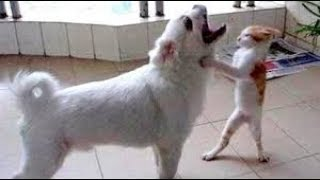 HARD TRY NOT TO LAUGH CHALLENGE - Funny ANIMAL || Super funny animal compilation