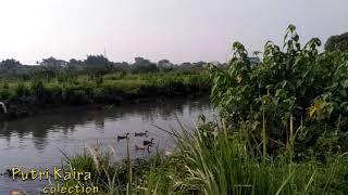 Potong bebek angsa ~ Lagu anak indonesia