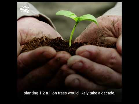 Planing 1.2 Trillion Trees Could Reserve Climate Change
