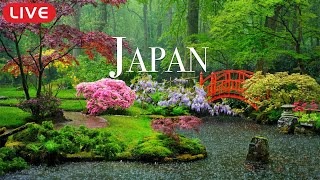 """🔴 Relaxing Asian Music """"Dreams of Japan"""" for Studying, Spa, Coffee, Work, Sleeping"""