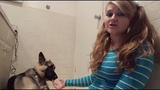MEET THE YOUTUBER THAT HAS S*X WITH HER DOGS