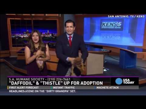 Puppy pees all over news anchor on live TV