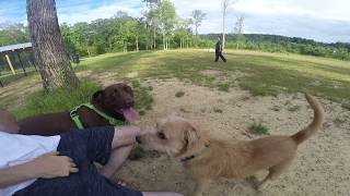 SERVICE DOGS FIRST TIME AT DOG PARK!!! HE MADE 4 NEW FRIENDS!
