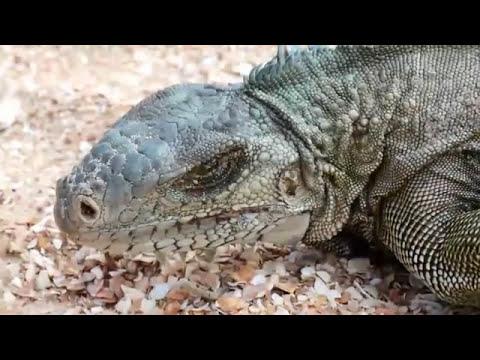 Rondreis Suriname | Sawadee Reizen