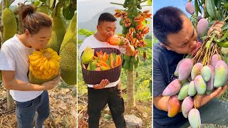 How to Chop Fruits on The Tree | Amazing Fruits Cutting Skills
