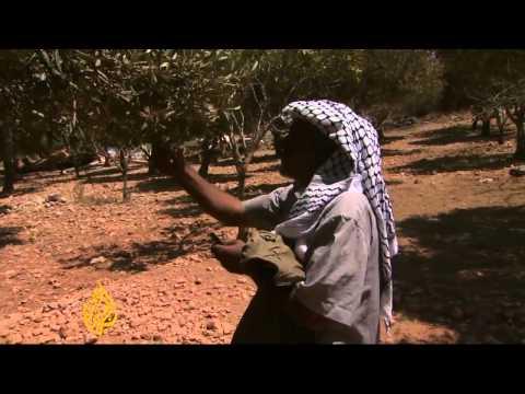 Israel evicts Bedouin community in Jerusalem