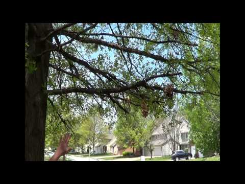 Tree Thinning and Air Flow Tips