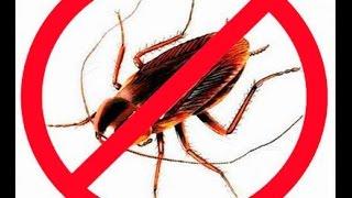 Таблетки от насекомых отравили семью