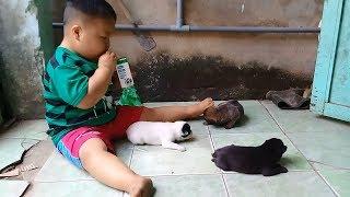 Đồ chơi trẻ em bé pin cho cún con uống sữa ❤ PinPin TV ❤ Baby toys dog milk