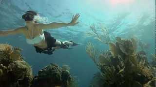 Plongée avec les requins en apnée