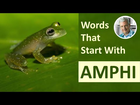Words With The Prefix AMPHI-