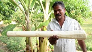BIG BANANA STEM Cooking IN My Village |  Natural Remedies for Kidney Stones | VILLAGE FOOD