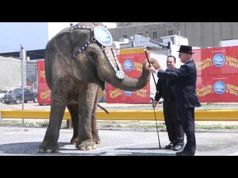 Ringling Bros. Elephant Duchess Plays Monopoly with AC Mayor
