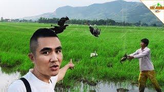 Bắt Chim Bằng Lưới : Bắt Chim Cò, Gà Nước, chim Chích   Duy Jungle