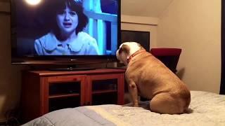 كلب يتابع فيلم رعب ويحذر ضحاياه من الخطر (فيديو)
