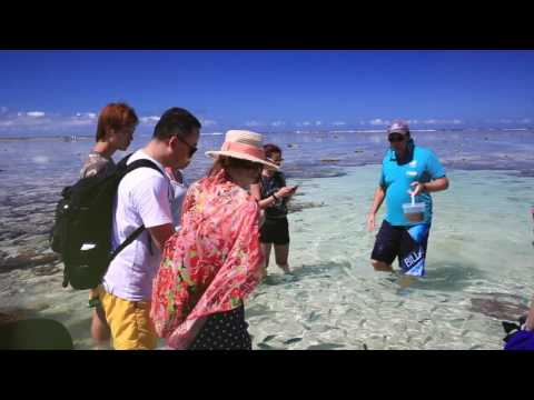 video Lady Elliot Island Day Trip from Gold Coast