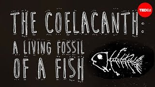 The coelacanth: A living fossil of a fish - Erin Eastwood