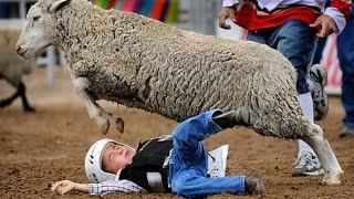 Angry Sheep Attacks Compilation 2015