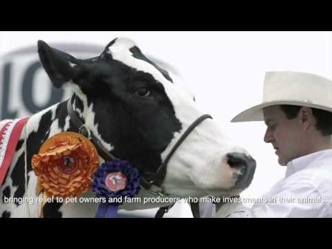 Agrovet Market 2014 - Corporative Video HD