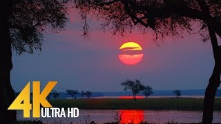 4K Wild Animals - Africa, Mana Pools National Park with Nature Sounds - 4 HRS
