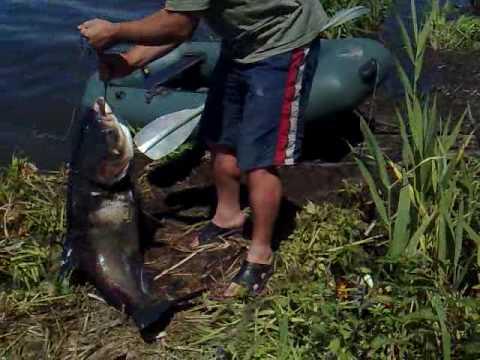 рыбалка ловля толстолоба