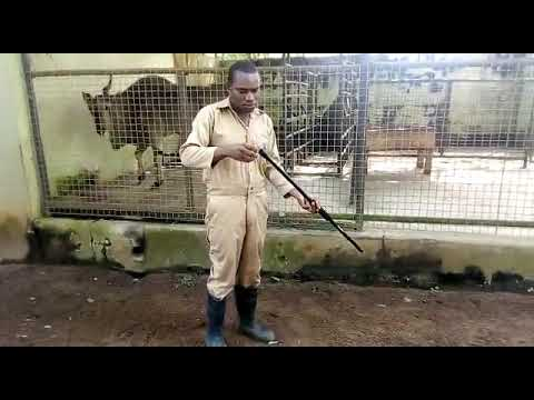 video Hybrid Blowpipe Kit for Humane Immobilization/Treatment of Animals (Evet Brand)