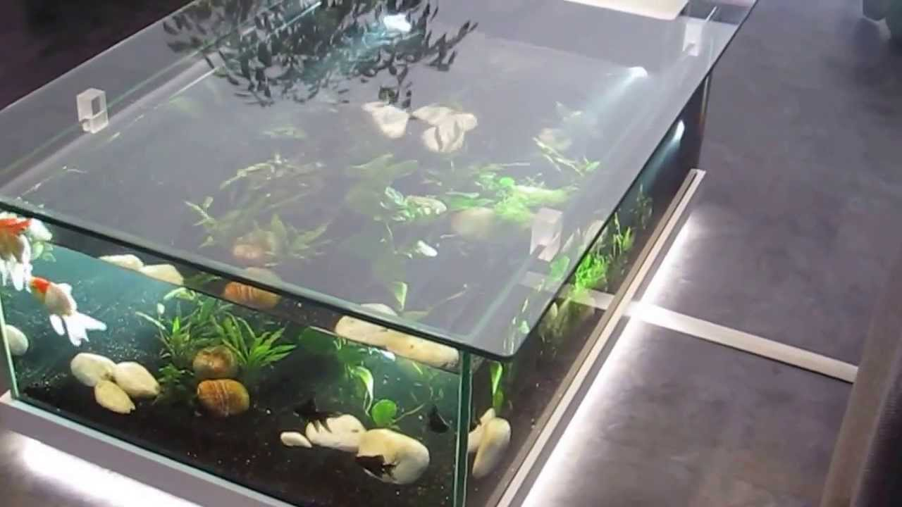 aquarium d 39 eau douce table aquarium amazone odyssee. Black Bedroom Furniture Sets. Home Design Ideas