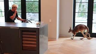 FIGHTING OFF WILD KANGAROO THAT BROKE INTO OUR HOUSE (real footage)