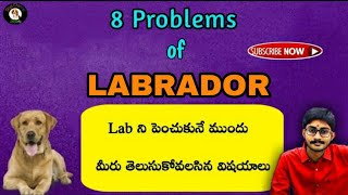 8 Problems of Labrador/ Things before owning a Labrador    In Telugu   