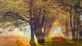 Instrumental Love Songs Piano - Morning Piano Relaxing Music - Happy Relaxing Piano Music For Baby