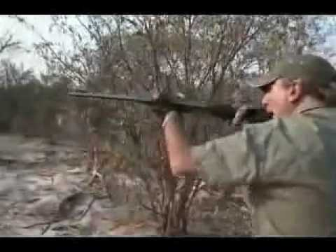 Napad afričkog lava