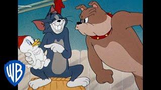 Tom & Jerry em Português | Brasil | Coletânea de desenhos clássicos | Tom, Jerry e Spike | WB Kids