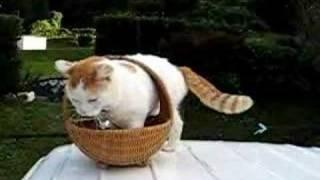かご猫10