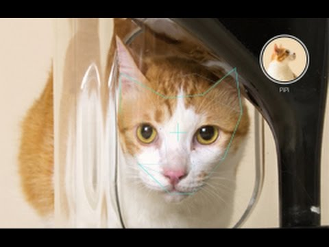 Facial Recognition For Cats Monitor Feeding Habits! - Mark Dice  - v7QaQmk9T0E -