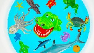 Lots of Zoo Sea Wild Animals Names Learn Colors For Children With Real Videos