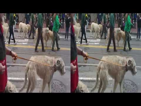 St Patrick's Day Parade 2012-San Francisco (YT3D:enable=true)
