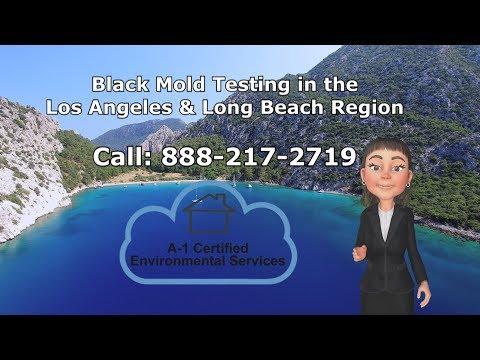 Black Mold Testing Pomona