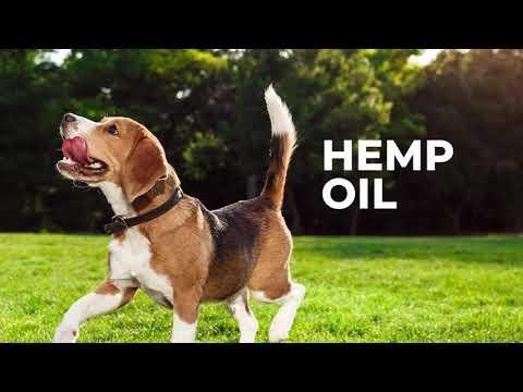Natural Hemp Oil for Pets | King Kanine Wellness