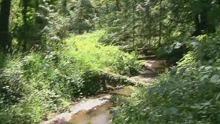 Cougar sightings near Tryon Creek State Park