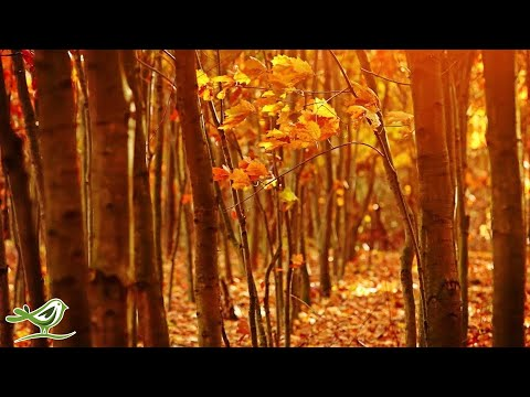 Fall Asleep Fast: Deep Relaxing Music, Sleep Music, Meditation Music, Sleeping Music ★135