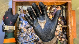 I Found a Megalodon Shark Tooth Underwater in a Shallow Creek! (How to Find Shark Teeth)