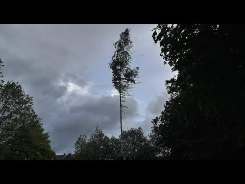 Der Maibaum von Sinthern