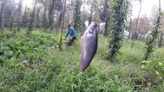 Hai cha con đi cắm câu trong vườn tiêu và cái kết bất ngờ. fishing with farmers viet nam