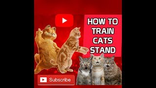 HOW TO TRAIN CATS TO STAND . VIRAL MALAYSIA . FUNNY CATS . FUNNIEST VIDEO . HOW TO TRAIN THE DRAGON
